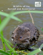 Wildlife of the Kennet and Avon Canal